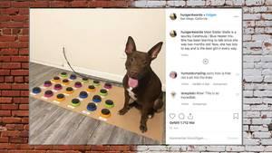 Stella kommuniziert per Soundboard mit ihrer Besitzerin