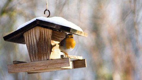 Vogelfutterstationen sind am besten für die Fütterung von Wildvögeln geeignet