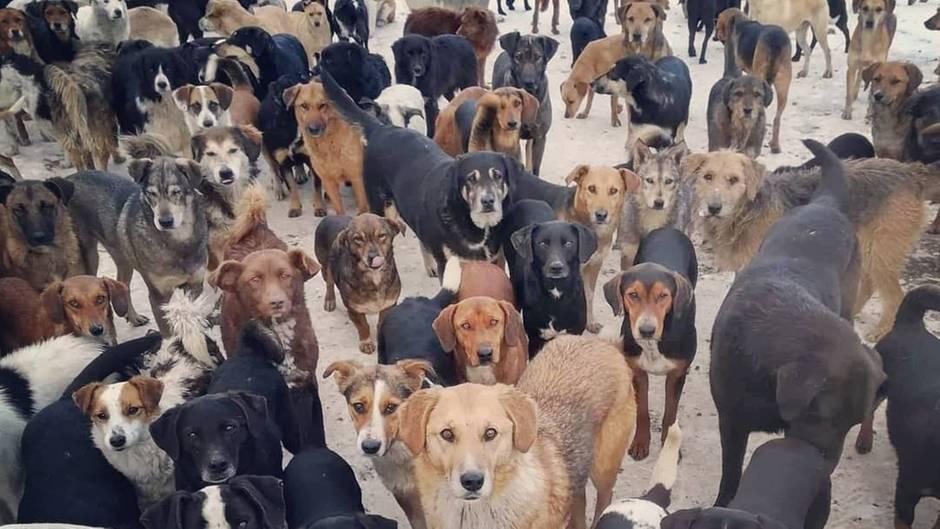 Das ist kein Wimmelbild!: Ein Herz für Hunde: 750 Tiere haben bei einem Mann Zuflucht gefunden
