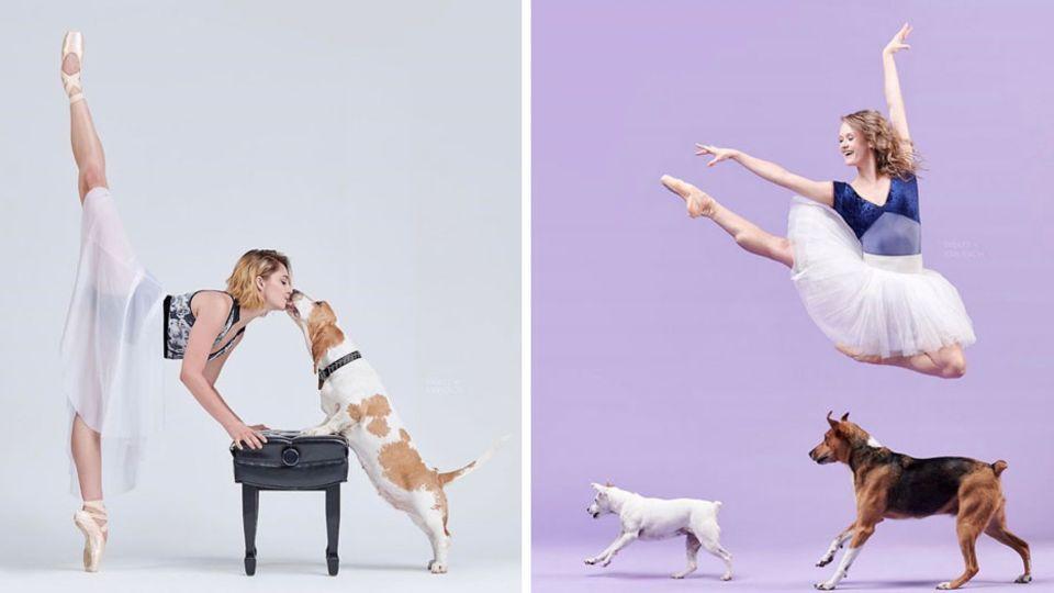 Die Fotografen schießen Bilder von Balletttänzern mit Hunden