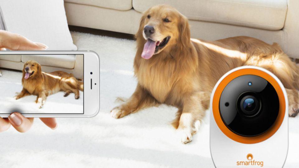 Den Hund von überall im Blick: Mit Smartfrog sehen Sie jederzeit via Smartphone in die eigenen vier Wände hinein. Gewinnen Sie eine Komplettlösung für Heimsicherheit bestehend aus IP-Kamera, App und Videospeicher. Wir verlosen 3x ein Sicherheitspaket im Gesamtwert von 1.000 Euro. www.smartfrog.de