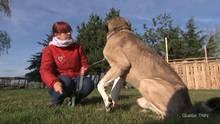 Beim Einbruch ins Tierheim wurde dieser abgemagerte Hund zurückgelassen