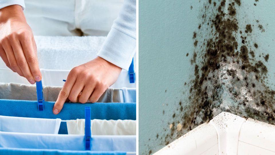 Mit diesen Tipps entsteht trotz trocknender Wäsche kein Schimmel in der Wohnung