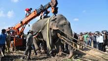 """Distrikt Goalpara, Indien: Dieser Elefantenbulle hat während mehrerer wütender Attacken binnen 24 Stunden fünf Menschen getötet – und wurde von Dorfbewohnern deshalb schon """"Osama bin Laden""""getauft, nach dem Gründer der Terrorgruppe Al-Kaida. Mit Hilfe von Drohnen wurde """"Osama""""bei einer massiven Suchaktion schließlich gestellt und mit Betäubungspfeilen außer Gefecht gesetzt. Jetzt wird das betäubte Tier mit einem Kran angehoben, um es in ein Waldgebiet zu transportieren, in dem es keine Menschen gibt. In Teilen Indiens gab es in den vergangenen Jahren viele Zusammenstöße zwischen Elefanten und Menschen, der Lebensraum der Dickhäuter wird durch menschliche Siedlungen kleiner."""