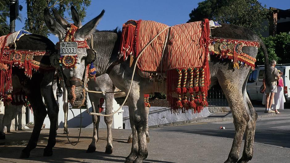 Ein Esel im traditioneller Konstüm