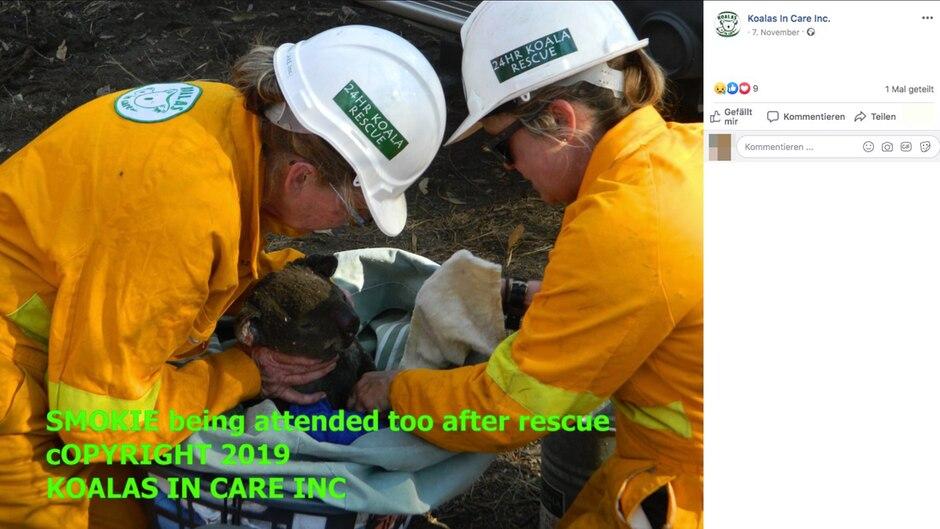 Zwei Frauen des Rettungsteams wickeln einen verletzten Koala in eine Decke