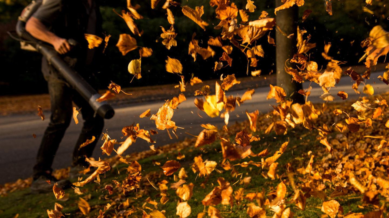 Sind Laubbläser eine Gefahr für die Umwelt und Insekten? Das Bundesumweltministerium sagt: ja.