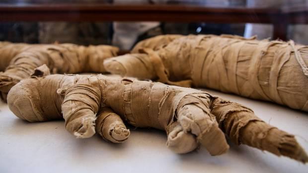 Mumifizierte Tiere liegen in der Nekropole Sakkara in Ägypten