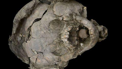 Zwischen dem Kopf und dem Helm aus Knochen wurde eine Lage Muschelkalk gefunden.