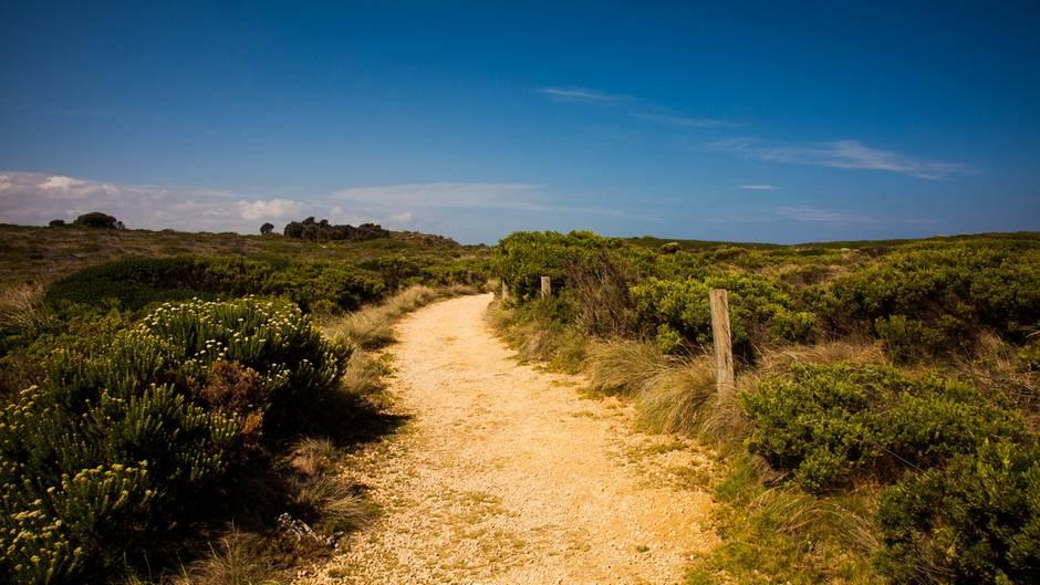 Wildnis in der Nähe der Great Ocean Road in Australien