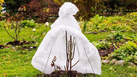 Auch der Garten muss auf den Winter vorbereitet werden