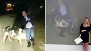 Video aus Griechenland: Bissiges Schwein belästigt Reporter während Live-Schalte