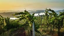 Zwischen Worms, Mainz, Bingen und Alzey liegen Weinberge unterschiedlichster Beschaffenheit: Kalkböden, Löss, rötlicher Tonstein oder Lösssand