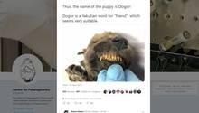 Ein Foto des in Sibirien gefundenen Welpen auf Twitter