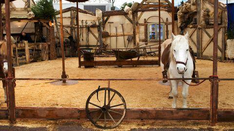 Ein weißes Pony in einer nachgebauten Scheune