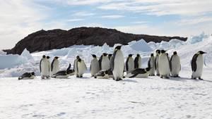 Kaiserpinguine in der Antartktis