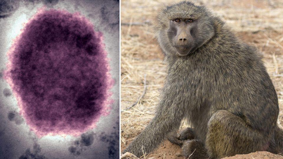 Affenpocken-Virus