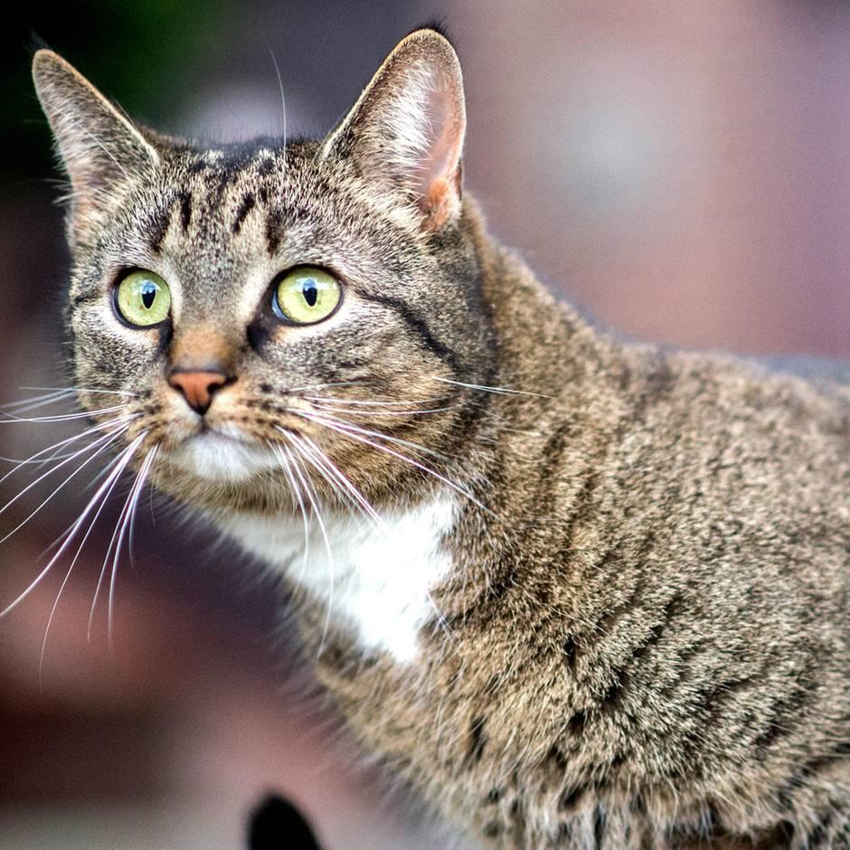 Hausarrest für Stubentiger?: Warum Hobbygärtner für Vögel viel gefährlicher sind als Katzen