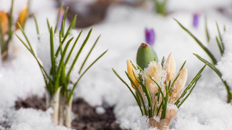 Blumenbeet im Winter