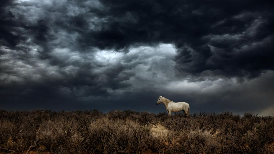 Pferd vor Gewitterfront