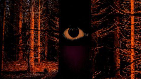 Ein Auge blickt dem Leser aus dem Dunkel des Waldes entgegen