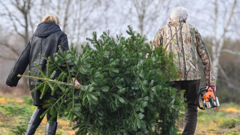 Ein älteres Paar trägt einen Weihnachtsbaum über eine Wiese. Der Mann geht rechts unt trägt eine Kettensäge