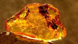 Bernstein ist ein gelber Schmuckstein aus fossilem Harz