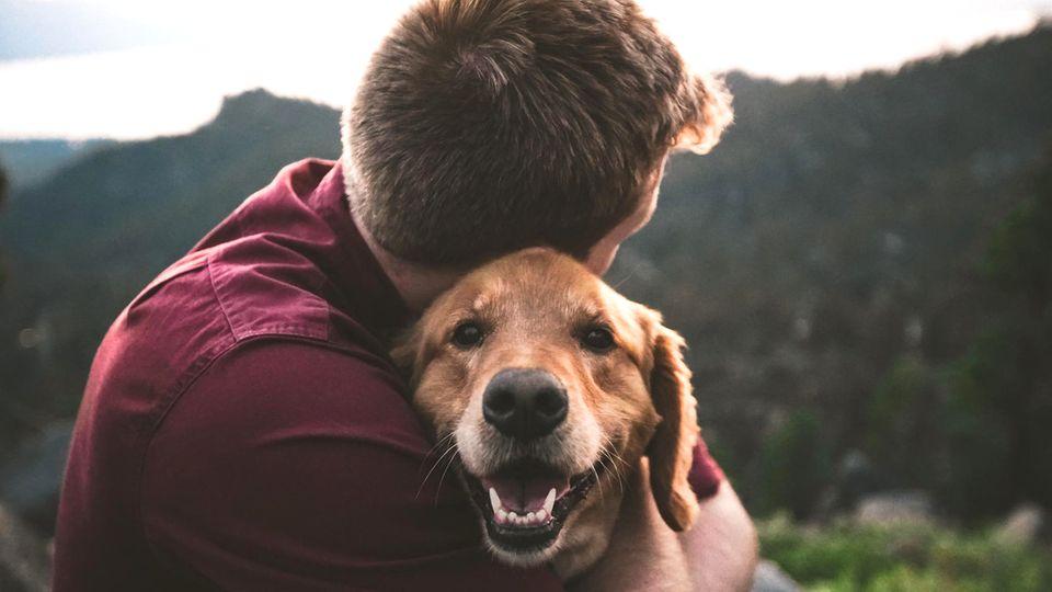 Hundebesitzer fühlen sichsehr verbunden mit ihren Tieren