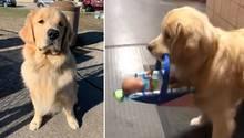 Polizeihund Ben klaut Spielsachen