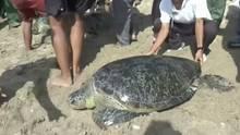 Sieben Meeresschildkröten konnten zurück ins Meer