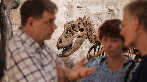 Nanotyrannus auf einer Saurier-Ausstellung in Thrüringen