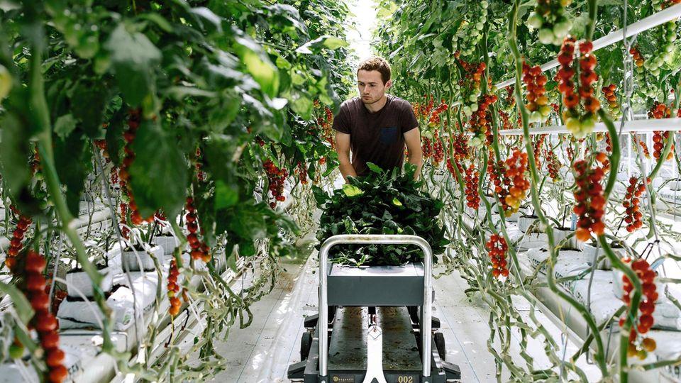 Der neue Garten Eden