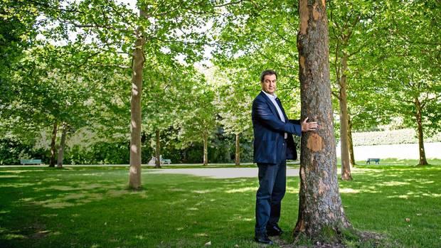 Markus Söder umarmt einen Baum
