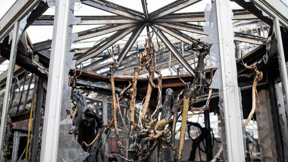 Blick in das abgebrannte Affenhaus des Krefelder Zoos: Warum konnte sich das Feuer so schnell ausbreiten?