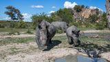 Nashorn im Matobo-National Park