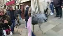 Männer mit Emus auf der Straße