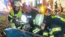Feuerwehrleute versuchen beim Brand einer Zoohandlung ein Kaninchen mit einem Sauerstoffgerät zu beatmen