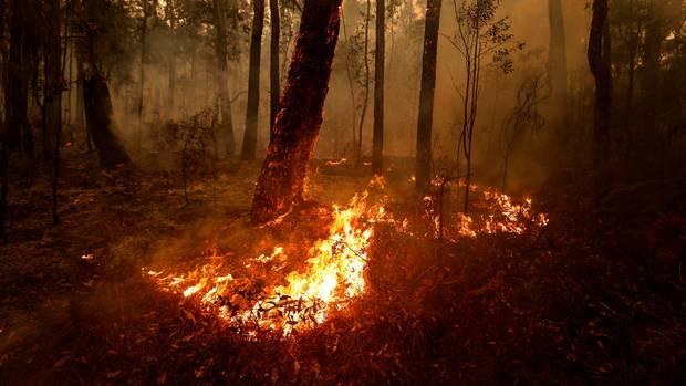 Ein Wald wird von Flammen bedroht