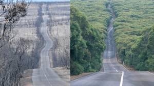 Die Bilder zeigen, welche Ausmaße die Brände für Natur und Tiere haben