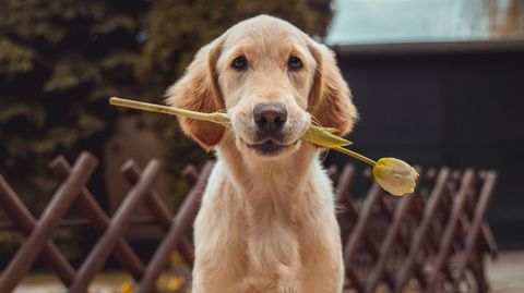 Hundenamen Bild