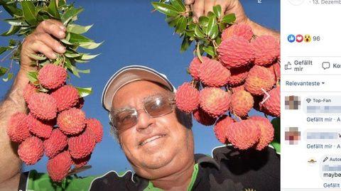 Ein Leben für Lychees: Seit 40 Jahren züchtet Tibby Dixon die Früchte