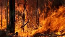 Australien, Tomerong: Ein Buschfeuer, welches gelegt wurde um einen größeren Brand in der Nähe einzudämmen