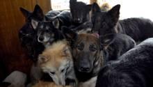 Animal Hoarding: Wenn Tiere-Sammeln zum Zwang wird