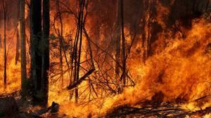 Ein Buschfeuer, welches gelegt wurde um einen größeren Brand in der Nähe einzudämmen, brennt im Bundesstaat New South Wales