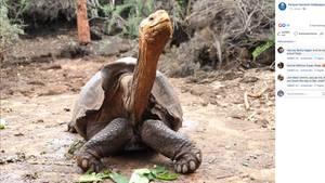 Schildkröte Diego