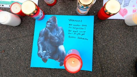 Die Trauer nach dem tödlichen Brand im Krefelder Affenhaus war groß