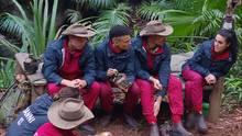Die Dschungelcamp-Teilnehmer Raúl Richter, Prince Damien und Marco Cerullo können offenbar auch Kandidatin Elena nicht von ihren Qualifikationen überzeugen