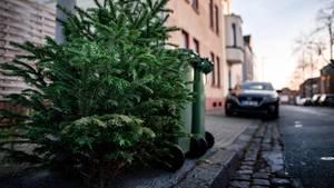 Ein ausrangierter Weihnachtsbaum liegt neben Mülltonnen auf dem Fußweg an einer Straße