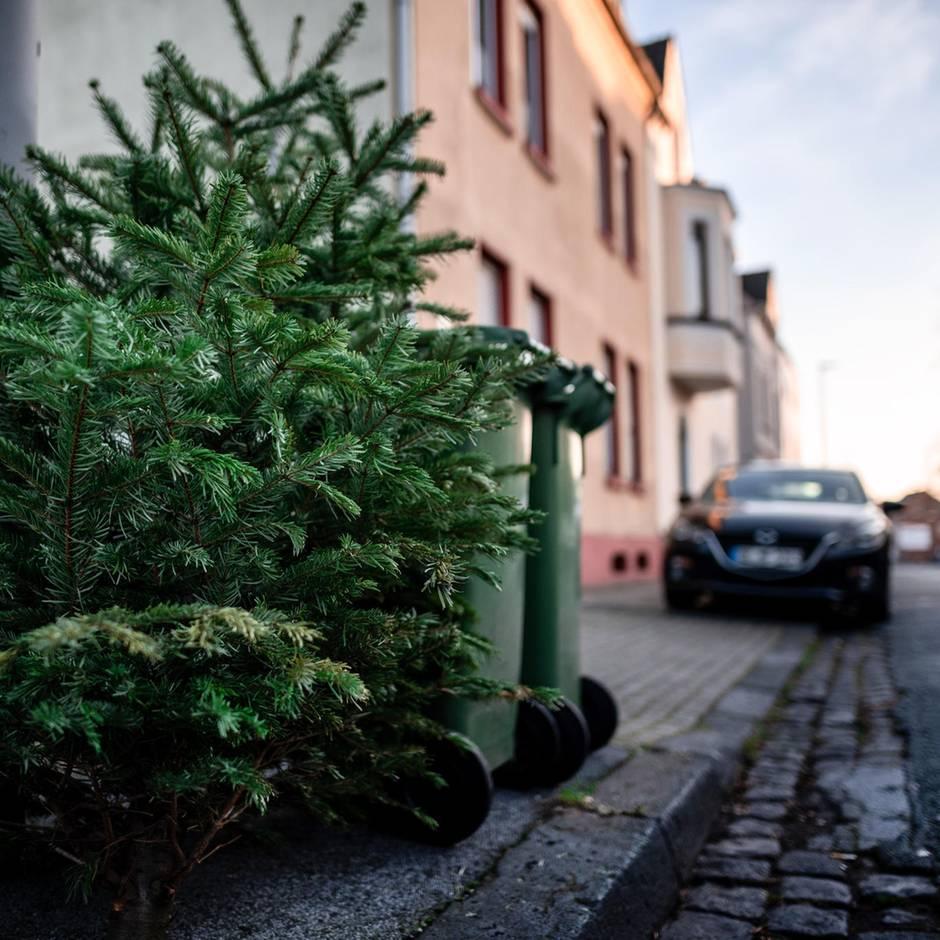 """Dreiste Aktion: Dieb """"pflückt"""" Geldspenden von ausgemusterten Weihnachtsbäumen – Feuerwehr reagiert cool"""