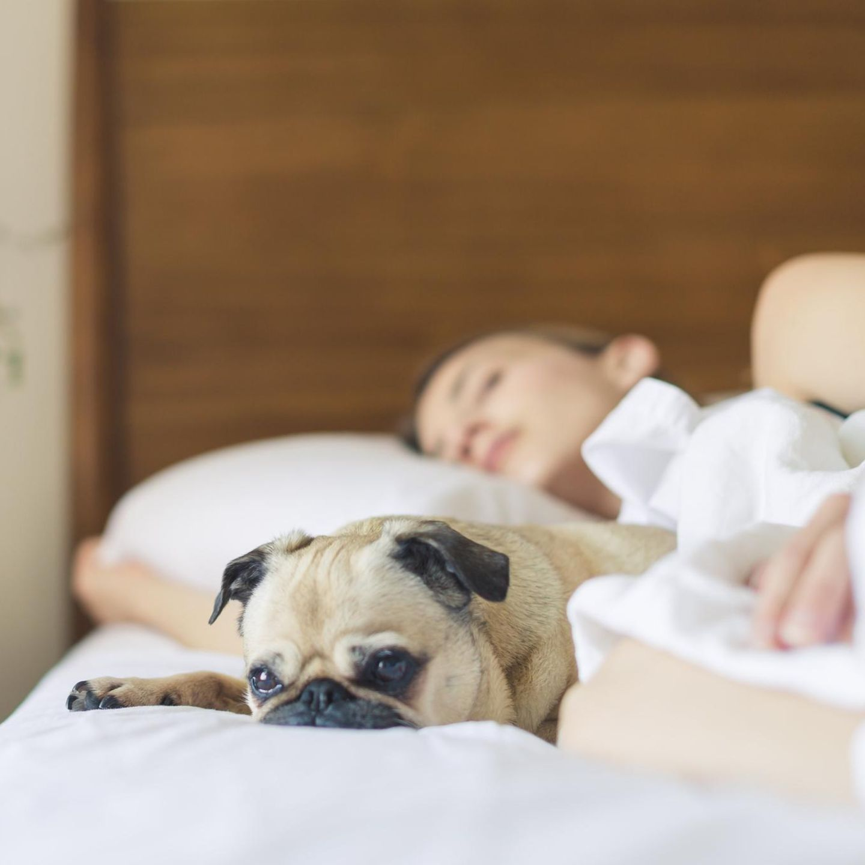 Von frau bekommt hund kind Der leckende